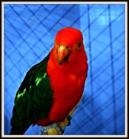 Parrot II by tere-fere-qq