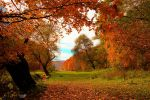 Autumn colours III by valiunic