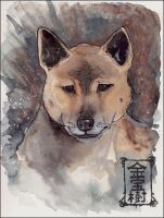 New Guinea Singing Dog by Valhalrion