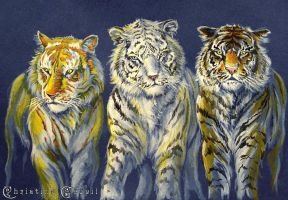 Three Tigers by Christiana-Goupil