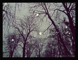 Snowy trees. by AlexBlood
