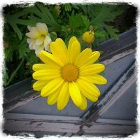 Yellow 2013 by ltiana355