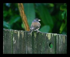 On The Fence by swashbuckler