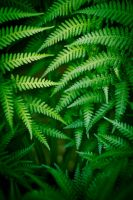 Fronds by gorcrow