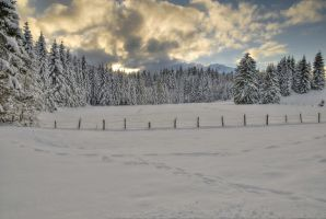 Fency Winter Background by Burtn