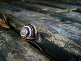 Baby Snail by Gr8-Gatensby