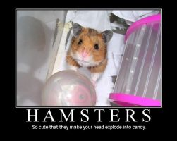 The truth about hamsters by Yushi