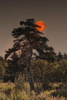 Sunset and Moon Rise by Witch-Dr-Tim