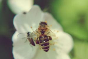 Bee by Sher-Tavi