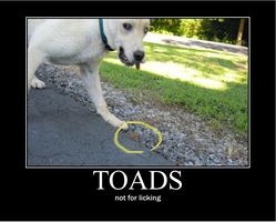 Toads . . . by DrawsWithPaws