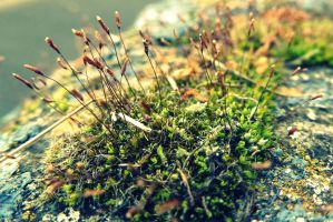 Moss. by GERARDwayFORlife