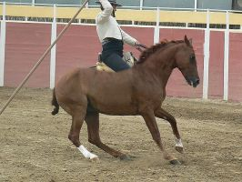 removed tack spanish horse by suuslovertje