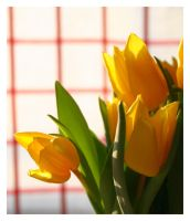 Yellow Tulips by xuvi