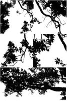 Branches - Brushes by assimilated