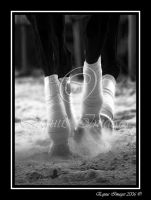 Polo Wraps by equusimages