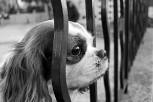 Memories of a Dog by PhotographersClub