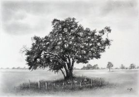 Common Oak by aakritiarts