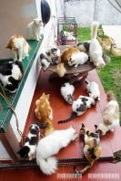 Some of My Cats in my Backyard :) by adrianhefni