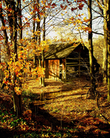 autumn afternoon by Toadsmoothy2