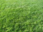 Grass Texture II by KelHemp
