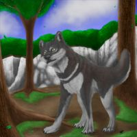Wolf in the forest by SatoshixMuu