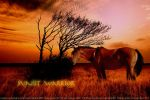 Indian Horse by Starlit-Stock