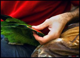 Paul and Parrot by DerekProspero