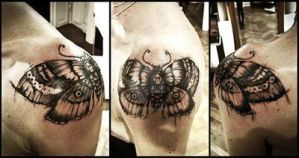 Shoulder moth by annits