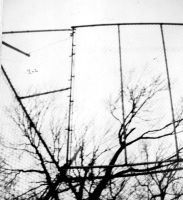 Caged Branches by annwyd