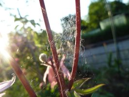 Spider web Stock by LeeStock