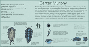Carter Murphy 2012 REFERENCE SHEET by VCR-WOLFE
