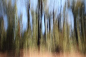 Abstract Trees by decoaddict