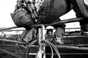 Cowboys on Fence by photoart1