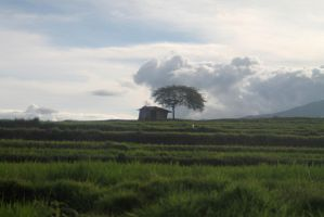 Little house on the ricefields by altanimator