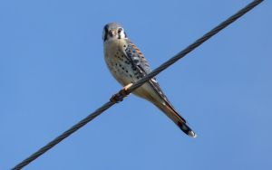 bird on wire by Beausoliel