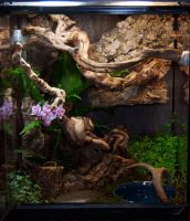 Carpet python habitat by Phoenix-Cry