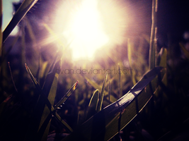 The Grass and the Sun 3 by Hvan