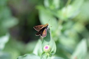 Butterfly by magicia