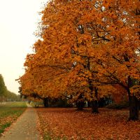 Autumn Trees 01 by kuschelirmel-stock