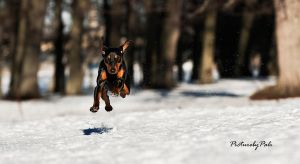 Running Ella by PictureByPali