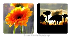 flowers n sun by adriannajestem