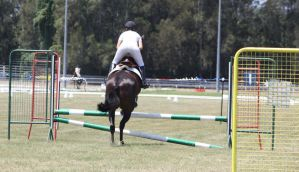STOCK Showjumping 380 by aussiegal7