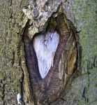 A Tree with a Heart by FrankAndCarySTOCK