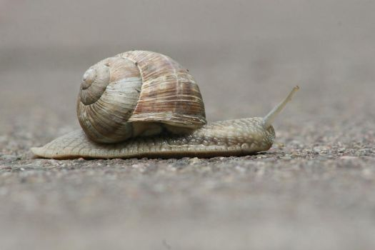crossing snail by pyw