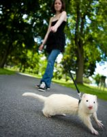 Ferret's Day Out by theaquallama