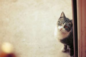 The Innocent Look by Analy-Aranda