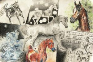 Arabian Horse Collage by akuinnen24