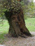 a Green Man by nonyeB