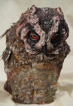 Otus scops by montiljo