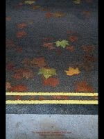 Autumn Leaves by GMCPhotographics